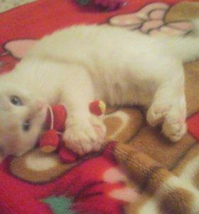 потеряли белого кот...голубоглазая девочка, в р-н