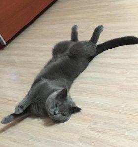 Мачо для вязки
