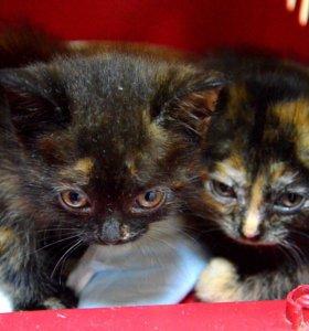 Коты, кошки и котята