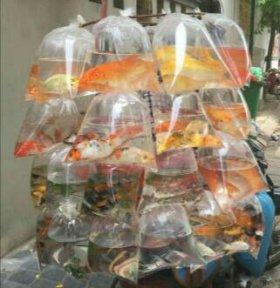 Продаются Рыбки