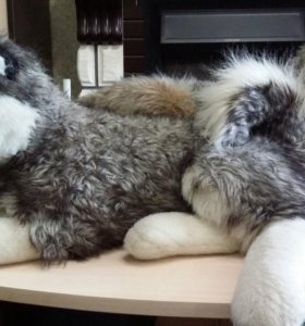 Мягкие игрушки, хаски и волк.