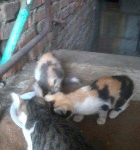 Котята ищут хозяина