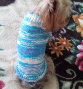 Одежда для маленьких собак, или кошек
