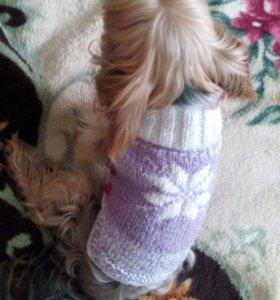Одежда для маленькой собачки, или кошки