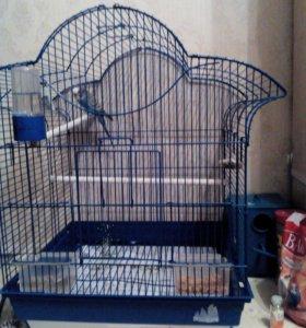 Попугай мальчик и большая клетка с домиком