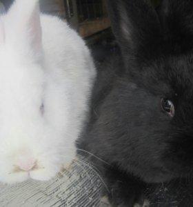 Продажа крольчат.