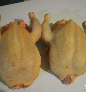 Мясо домашнее цыплёнка бройлера