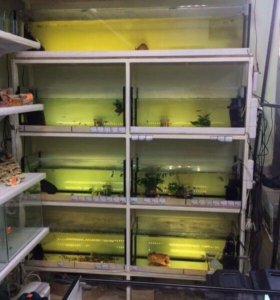 Стеллаж с аквариумами