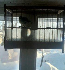 Клетки для певчих птиц  и певчие птицы