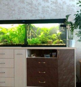Распродажа аквариумов