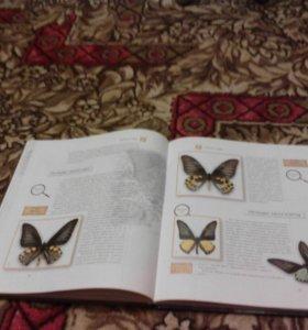 Энциклопедия про бабочек