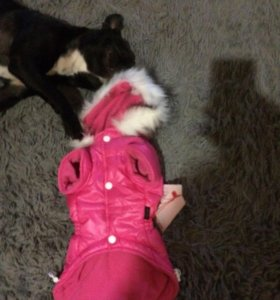 Куртка для собаку