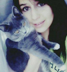 Кошка, возраст 10 месяцев. Зовут Василиса