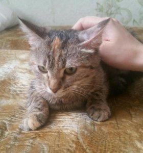 Котенок в добрые руки. Срочно