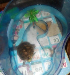 Черепаха водяная