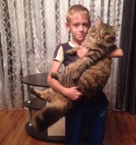 Мейн-куны. Супер большие котики и лучшие друзья!!!