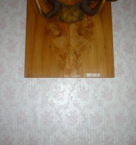Продаю сувенирные рога благородного оленя
