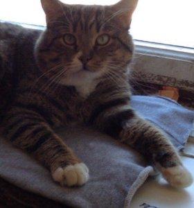 Кот ищет доброго, любящего, ответственного хозяина