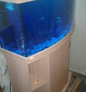 аквариум с тумбой 110л.