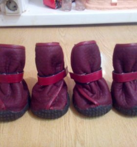 Ботинки для собак.