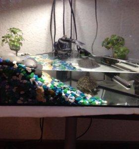 Продаётся черепаха вместе с аквариумом