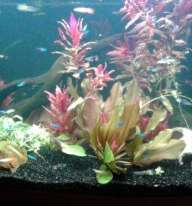 Обслуживание, (чистка ) аквариумов