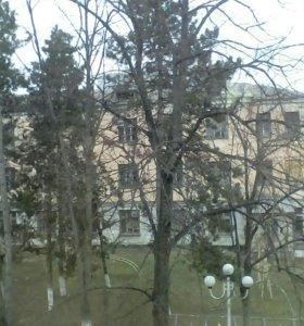 Деревья на дрова
