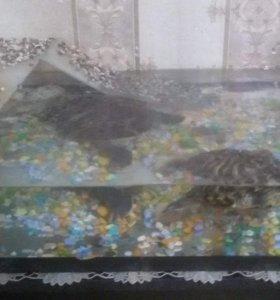 Черепаха!!!!