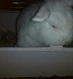 Кролик с клеткой и принадлежностями