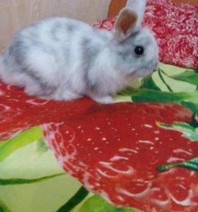 Декоративный кролик+ поилка