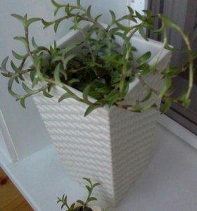 Цветы для дома и офиса