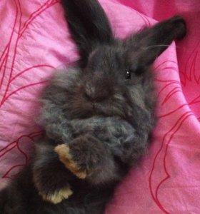 Кролик на вязку