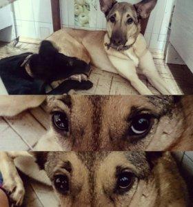 Собака, девочка, ищет дом