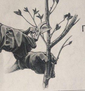 Осенняя и весенняя обрезка плодовых...