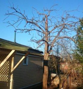 Обрезка плодовых деревьев весна
