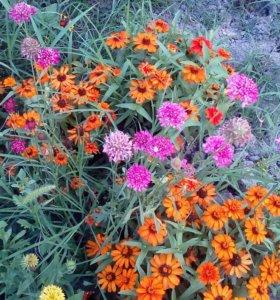 Семена цветов для вашего сада....
