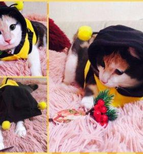 Одежда (костюм) для кота, кошки или собаки