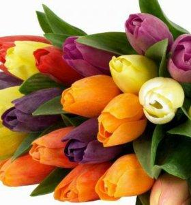 Тюльпаны для милых дам