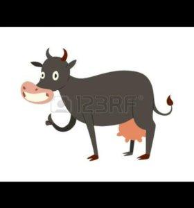 Продам телок от молочной коровы