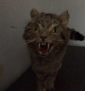 Чучело дикого кота