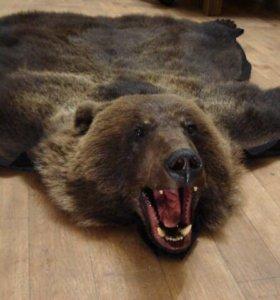 Шкура-ковёр медведя