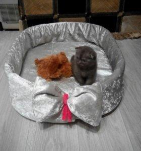 Для котят и кошек