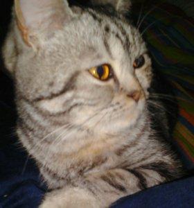 Кошечка загуляла. Нужен котик срочно!