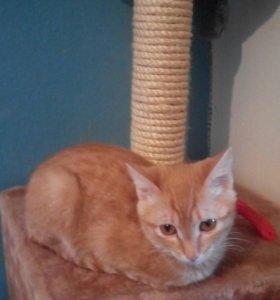 Котёнок (7 месяцев)