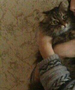 Отдам кошку )))