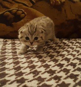 Январские котята