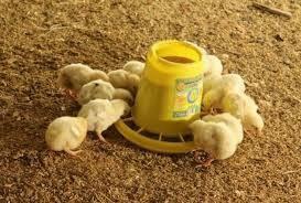 Комбикорм для цыплят в Ступино