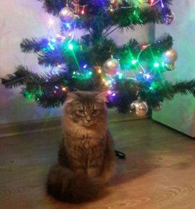 Котик ищет кошечку для дружбы на один день