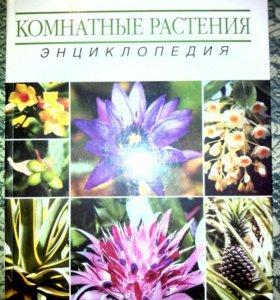 Комнатные растения энциклопедия