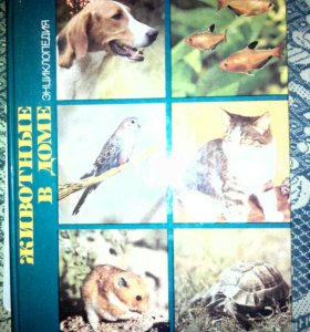 Животные в доме энциклопедия